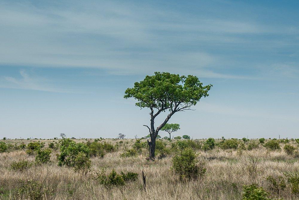 Südafrika 2013